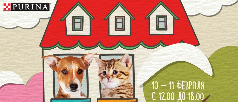 110 животных будут ждать своих хозяев на благотворительной выставке «Домой!»
