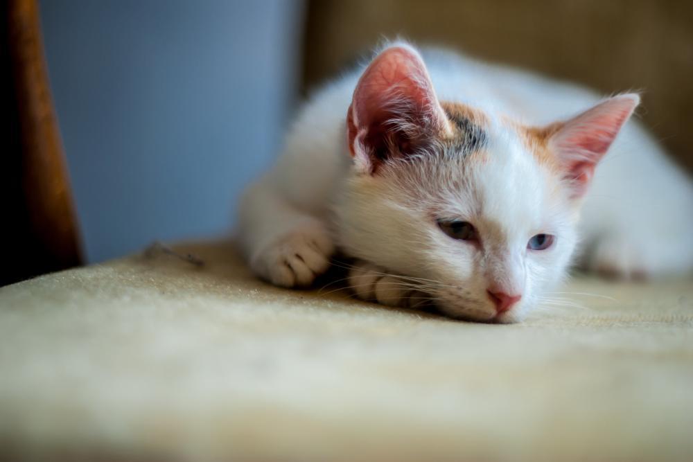 Глисты у кошек и собак: