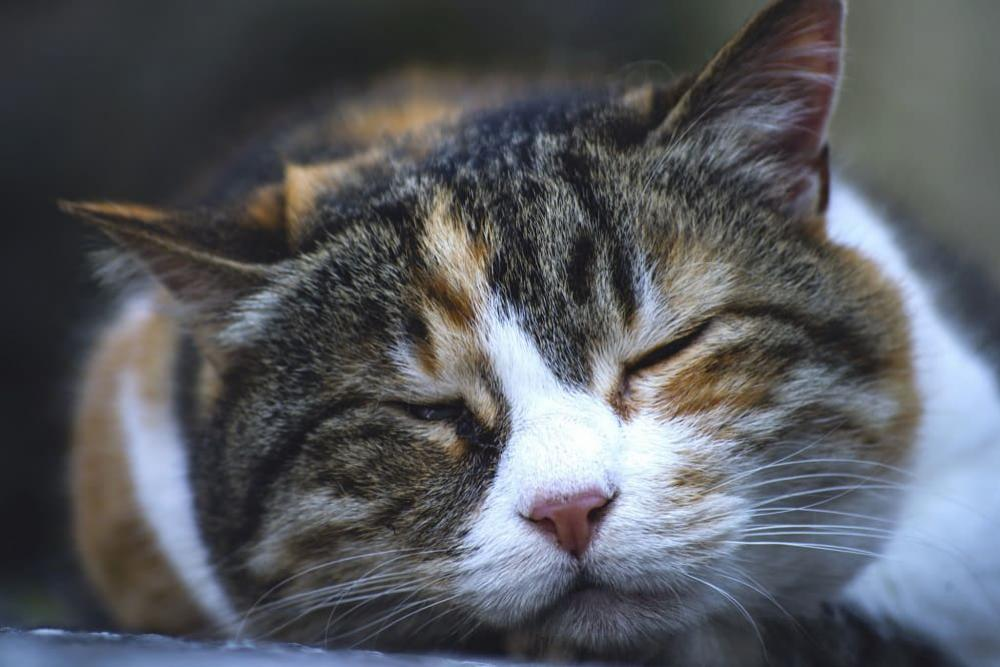 Польза кота человеку