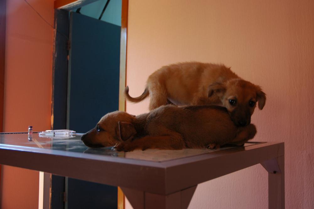 инфекциях у кошек и собак