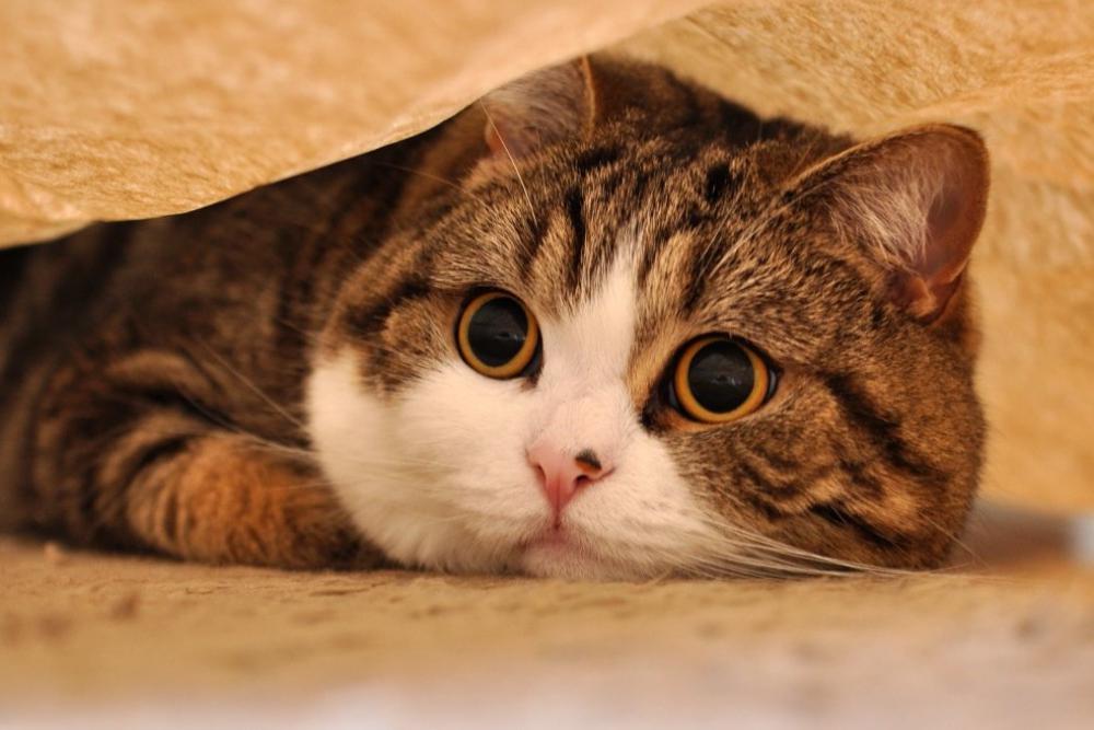 Кошки факты и все о кошках