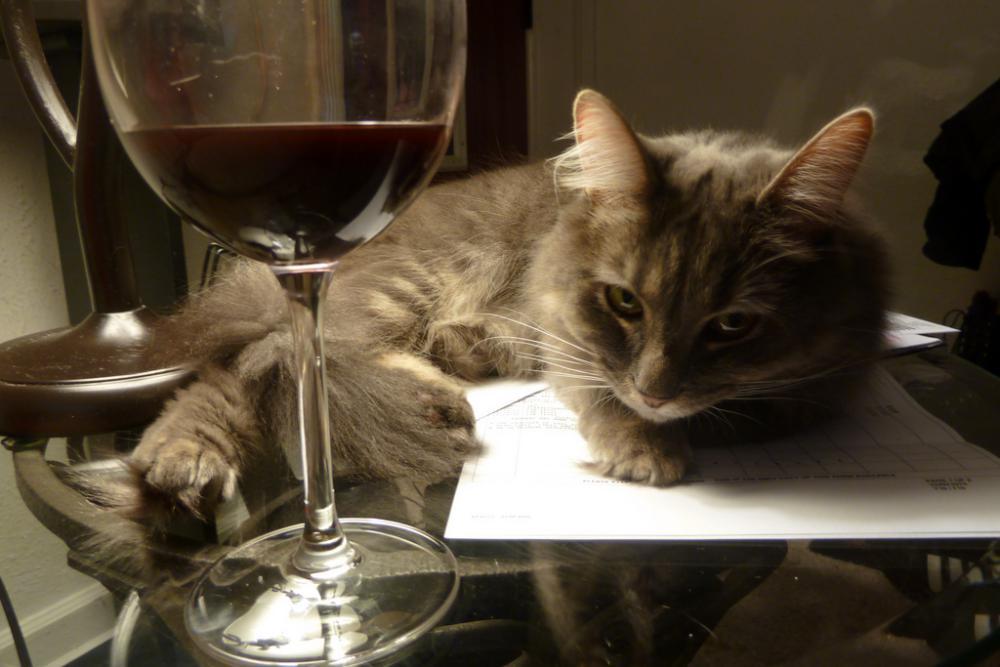 Картинка кот с вином