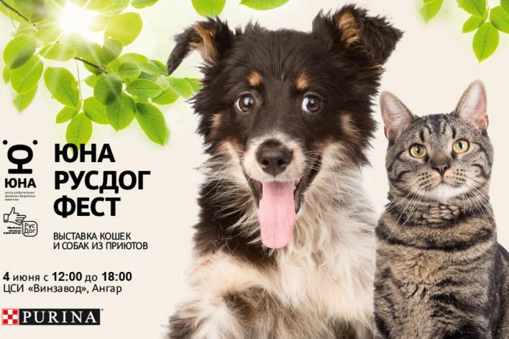 4 июня на «Винзаводе» пройдет фестиваль Юна-РусДог Фест