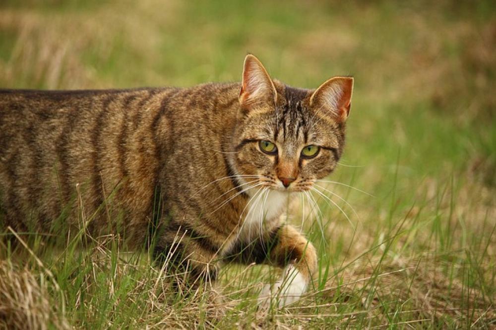 Анализ ДНК показал, как кошки завоевали мир