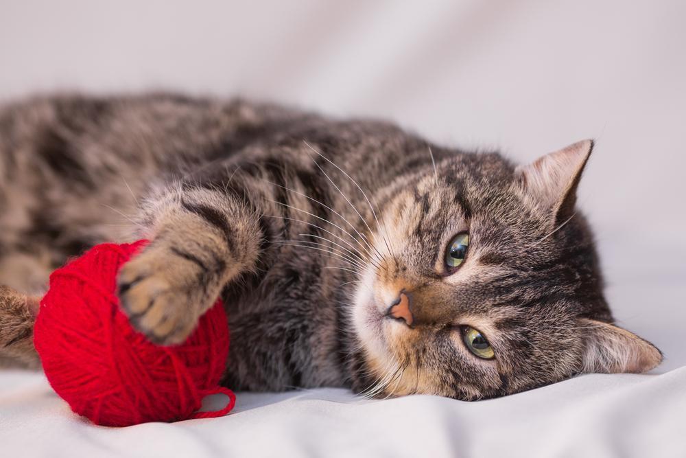 Безопасность кошки в доме: 5 правил