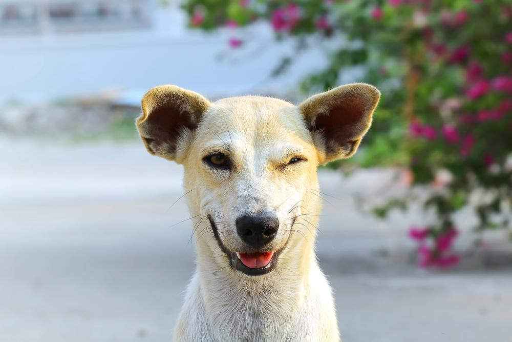 До какого возраста вяжут собак