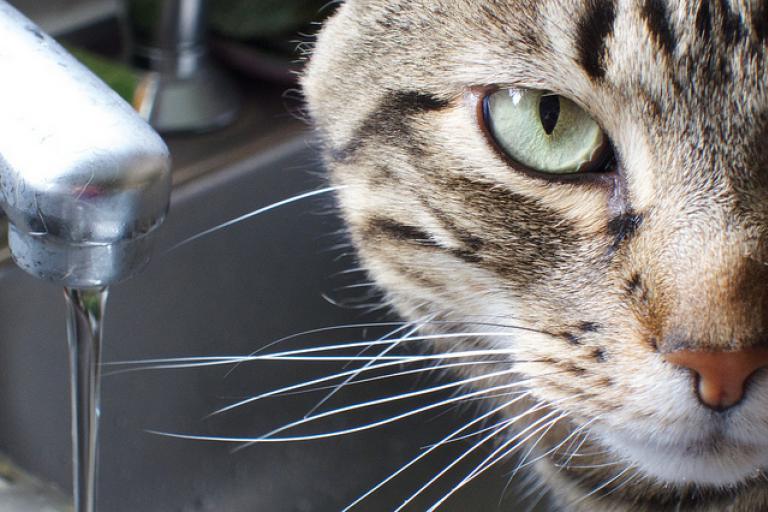 Почему кот лижет диван