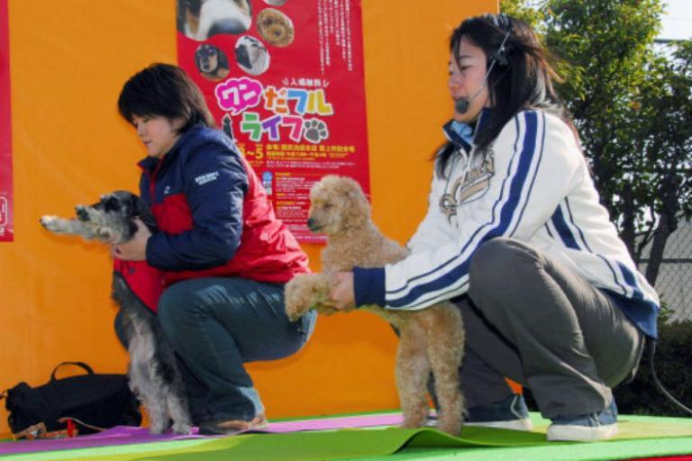 В Гонконге побит мировой рекорд по занятиям йогой с собаками