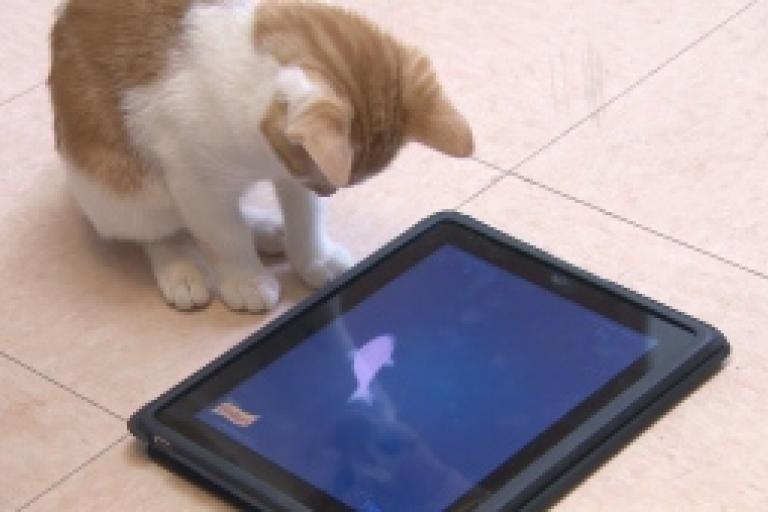 Канадский приют подарил своим кошкам айпады