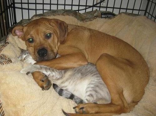 собака и кот смешные фото